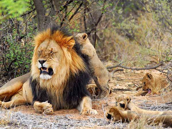 национальный парк Крюгера, ЮАР отдых