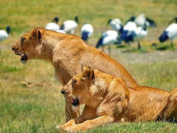 национальные парки Африки, Уганда