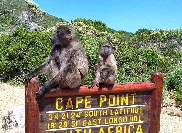 Национальный парк Чобе, Йоханнесбург