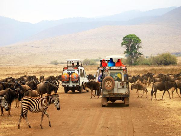 отдых в танзании, сафари тур