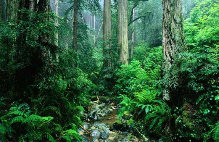 Леса Южной Африки