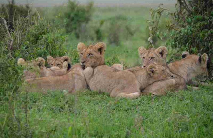Природа Кении