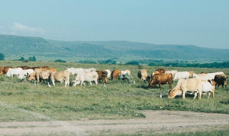 Природные ресурсы Кении