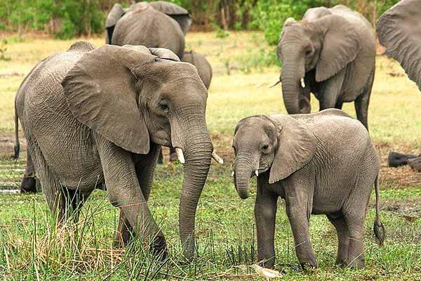 10-dop-slon